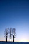Europa, DEU, Deutschland, Nordrhein Westfalen, NRW, Rheinland, Niederrhein, Duesseldorf-Hubbelrath, Abendstimmung, Baeume,Winter, Himmel, Pappeln, Kategorien und Themen, Natur, Umwelt, Landschaft, Jahreszeiten, Stimmungen, Landschaftsfotografie, Landschaften, Landschaftsphoto, Landschaftsphotographie, Wetter, Wetterelemente, Wetterlage, Wetterkunde, Witterung, Witterungsbedingungen, Wettererscheinungen, Meteorologie, Wettervorhersage....[Fuer die Nutzung gelten die jeweils gueltigen Allgemeinen Liefer-und Geschaeftsbedingungen. Nutzung nur gegen Verwendungsmeldung und Nachweis. Download der AGB unter http://www.image-box.com oder werden auf Anfrage zugesendet. Freigabe ist vorher erforderlich. Jede Nutzung des Fotos ist honorarpflichtig gemaess derzeit gueltiger MFM Liste - Kontakt, Uwe Schmid-Fotografie, Duisburg, Tel. (+49).2065.677997, ..archiv@image-box.com, www.image-box.com]