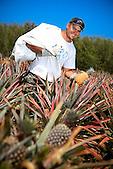 Producteur d'ananas, Voh, province Nordg