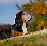 Bassett Hound Shopping cart has 3 Tabs:<br />