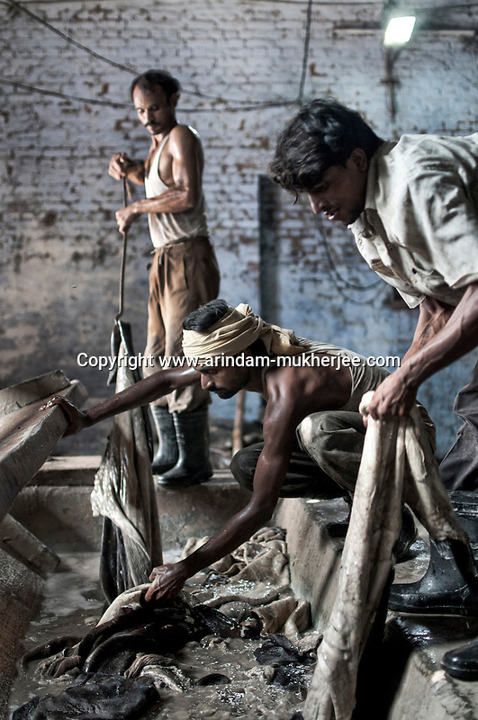 Men working in a tannery bare-handedly, without any safety gear, in Jajmau area, Kanpur. Exposure to the harmful chemicals used in the tannery causes skin diseases, respiratory diseases, gastro-intestinal ailments etc. Researches have shown presence of elevated amount of chromium in the blood and urine of the workers. Kanpur, Uttar Pradesh, India. Arindam Mukherjee