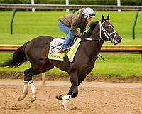LOUISVILLE,KNY - MAY 04:  Girvin Morning works  at Churchill Downs, Louisville, Kentucky. (Photo by Sue Kawczynski/Eclipse Sportswire/Getty Images)