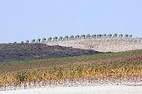 Vigneti in Piemonte.<br /> Vineyards in Piemonte.<br /> UPDATE IMAGES PRESS/Riccardo De Luca
