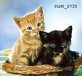 Marek, ANIMALS, REALISTISCHE TIERE, ANIMALES REALISTICOS, cats, photos+++++,PLMP2735,#a#