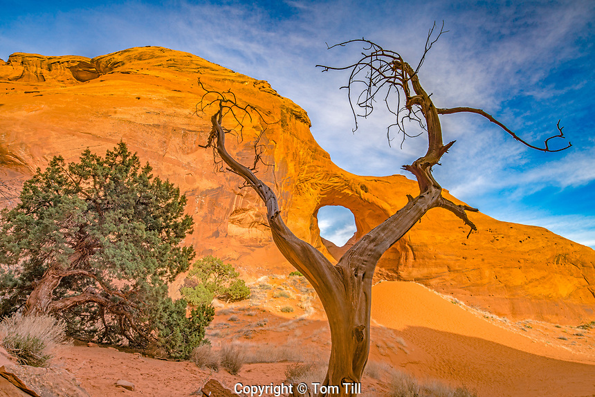 The Ear of the Wind and ancient juniper, Monument Valley Traibal Park, Arizona