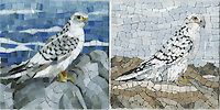8 x 8 inch Gyrfalcon Trivets in glass and in marble