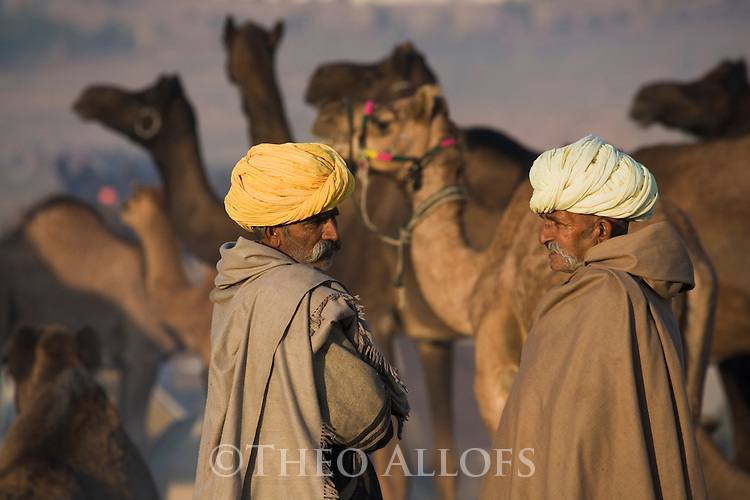 Scene at selling grounds of Pushkar camel fair; men bargaining over camels;.The annual Pushkar camel fair is one of the main tourist attractions in India, Pushkar, Rajasthan, India