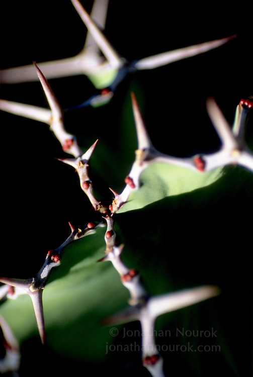 close-up of cactus thorns