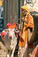 Posing as a Sadhu, or holy man, and having a colorful cow during the Pushkar Camel Festival can be an easy way to make a quick couple of Rupees by soliciting donations from unsuspecting tourists..