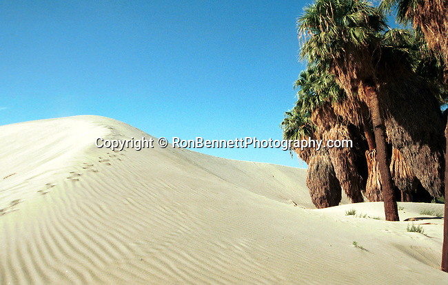 Desert sand dune mirage with palms, Desert mirage with palms, mirage, dunes, sand dunes, desert, palms, mirage in desert, palm trees and sand dunes, Fine Art Photography by Ron Bennett, Fine Art, Fine Art photography, Art Photography, Copyright RonBennettPhotography.com © Fine Art Photography by Ron Bennett, Bennett, Fine Art, Fine Art photography, Art Photography, Copyright RonBennettPhotography.com ©