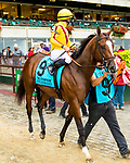 """OCTOBER 6, 2018 : Aurelius Maximus in post parade of the """"Win & You're In"""" Champagne Stakes on Champagne Stakes Day at Belmont Park on October 6, 2018 in Elmont, NY.  Sue Kawczynski/ESW/CSM"""