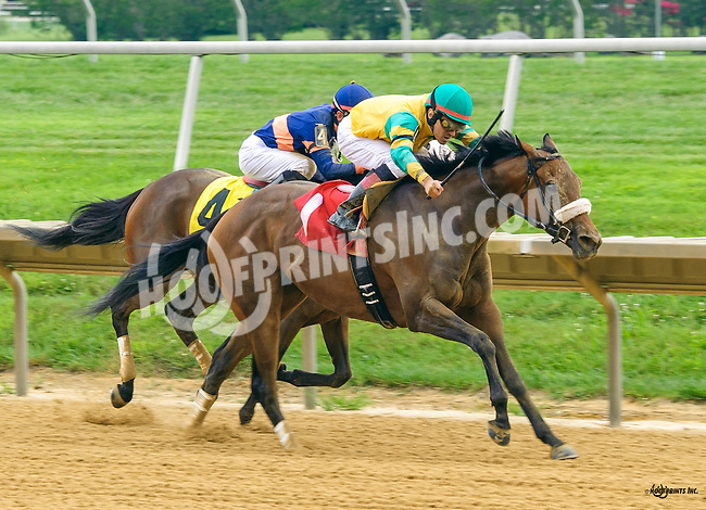 Best Friends winning at Delaware Park on 7/28/16