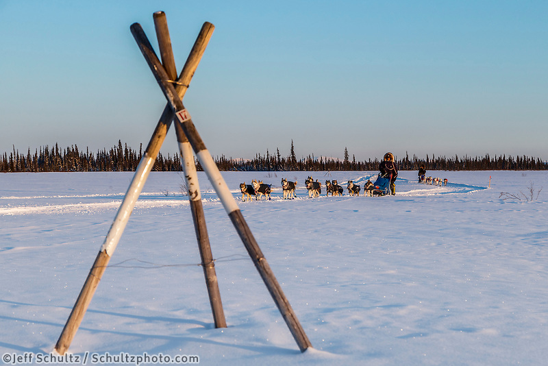 Lev Shvarts leads Marcelle Fressineau past a tripod trail marker as they run on a swamp a few miles before the Huslia checkpoint on Saturday  March 14, 2015 during Iditarod 2015.  <br /> <br /> (C) Jeff Schultz/SchultzPhoto.com - ALL RIGHTS RESERVED<br />  DUPLICATION  PROHIBITED  WITHOUT  PERMISSION