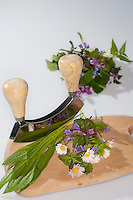 Essbare Wildkräuter, Kräuter werden mit Wiegemesser, Messer auf einem Brettchen zerkleinert, Ernte, Gänseblümchen (Bellis perennis), Taubnessel (Lamium spec.), Spitz-Wegerich (Plantago lanceolata), Gundermann (Glechoma hederacea), Edible wild herbs, herbs are crushed with mezzaluna, knife on a small board, harvest, English Daisy, Plantain, Ribwort, Alehoof, Ground Ivy, Dead Nettles