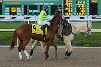 January 17, 2015:War Story (KY) with James Graham in the Lecomte Stakes at the New Orleans Fairgrounds course. Steve Dalmado/ESW/CSM
