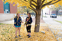 Fall gingko leaves on Engineering Row.<br />  (photo by Megan Bean / &copy; Mississippi State University)