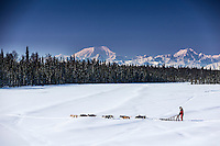 Dog musher Martin Buser runs his team during a spring training run on a lake with the Alaska Range in the background.   Southcentral, Alaska<br /> <br /> MR2013-03-23BuserMartin