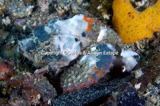 Scorpaenopsis neglecta, Bandtail scorpionfish, Lembeh, Indonesia