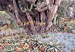 cacti at Huntington Gardens