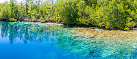 aerial view of coral reef and mangrove forest, Raja Ampat Islands, West Papua, Indonesia, Pacific Ocean
