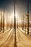 USA, Wyoming, Yellowstone National Park, Bobby Sock Trees, Lower Geyser Basin