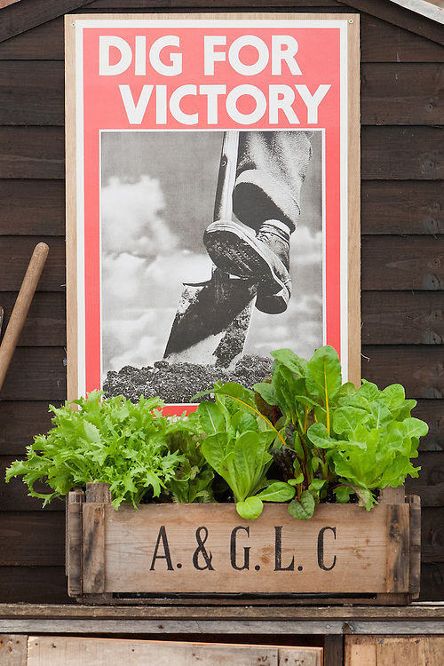 Second World War Dig For Victory poster and mixed salad box.