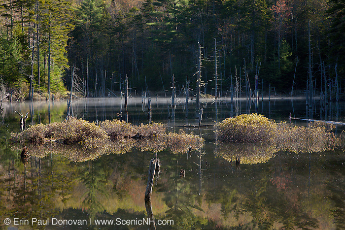 Pond along the Franconia Brook Trail during the spring months in the Pemigewasset Wilderness of the New Hampshire White Mountains.
