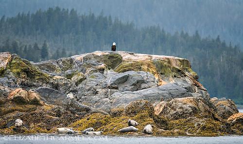 Alaskan Sentinel