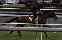 Bourbon Bay working on the turf for trainer Neil Drysdale at Santa Anita Park in Arcadia California
