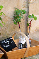 Young vines for sale. Wine shop. The town. Saint Emilion, Bordeaux, France