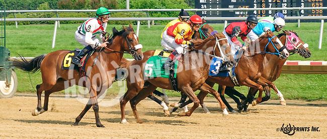 Desert Honour winning at Delaware Park on 7/1/15<br /> Desert Honour (Nivour de Cardonne - Annas Desert Rose)<br /> bred by in Virginia by Cre Run Farm