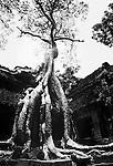 The roots of a tree grow around a building in the Angkor temple complex in Siem Reap, Cambodia.
