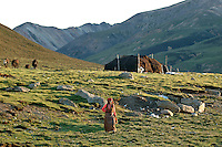 As we drove higher and higher into the mountains of Tibet, we began to see the black tents of nomads dotting the horizon and yak and dzo (A yak-cow hybrid bred for increased milk production) grazing along the rivers edge. We passed several groups of nomads starting yak dung fires and herding their animals back to camp in a routine that has been repeated every night for centuries..