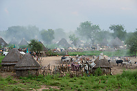 Ethiopia, Gambela, region Itang, village of ethnic group Nuer, cows in cattle camp in the evening / AETHIOPIEN, Gambela, Region Itang, Ethnie NUER, Dorf abends, Rinder kommen vom Weideland