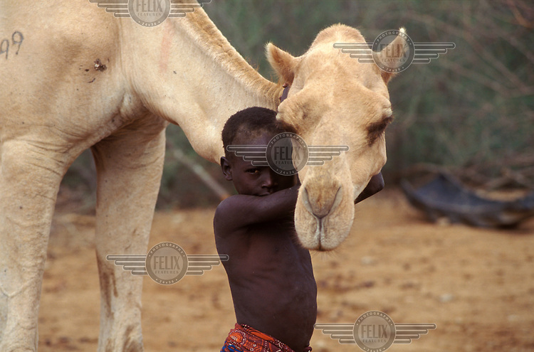 Pokot boy with camel.