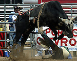 Bullrider Lonny Graham finds himself in a predicament as his spur hangs in the bull rope after bucking off a Southwick Rodeo Company bull during the Southeast Weld County CPRA Rodeo in Keenesburg, Colorado on August 12, 2006. Lonny was freed with the assistance of the bullfighters and gatemen.