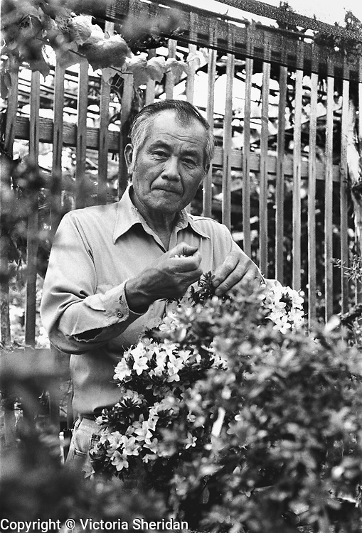 64 year old Bonsai Master Gardner Johnny Uchida. Part of the Face of Labor portrait series. 1999 (Photo/Victoria Sheridan)