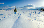 A small evergreen tree and drifted snow in Teton National Park, Wyoming in winter.