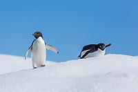 Detaille Island, Antarctic Peninsula