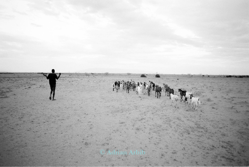 Turkana shepherd and flock , nr.  Kakuma, in the  Northern part of the Kenya bordering Sudan and Ethiopia.<br /> <br /> The Turkana are herders of cattle, sheep and goats and  are constantly migrating with their herds in search of  fresh pastures.