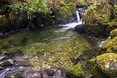 The Torrent Walk along the River Clywedog, Dolgellau, Snowdonia, Wales.