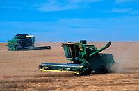 Combines harvesting wheat.