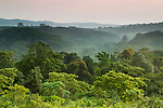 Tropical rainforest, Kibale National Park, western Uganda