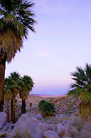 soft pastel pink and blue hues after sunset at Desert Palm