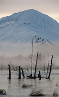 Dead timber killed by flooding in the 1964 earthquake at the end of Turnagain Arm, Alaska.