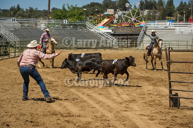 75th Amador County Fair, Plymouth, Calif.<br /> <br /> Local real ranching 3-man cattle penning competition on Day 3