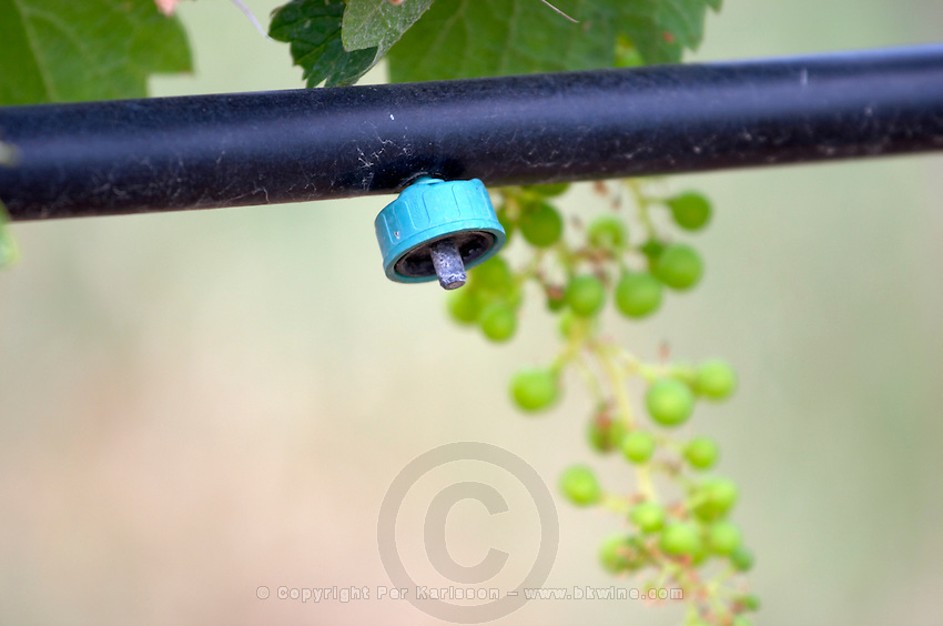 Drip nozzle. Irrigated vines. Unripe grapes. Kir-Yianni Winery, Yianakohori, Naoussa, Macedonia, Greece