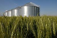 ROMANIA Banat, wheat field and large grain silo/ RUMAENIEN Banat, Weizenfeld und Getreidespeicher