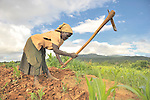 Violet Kawelani, age 74, at work in her farm field in Zombwe, in northern Malawi.