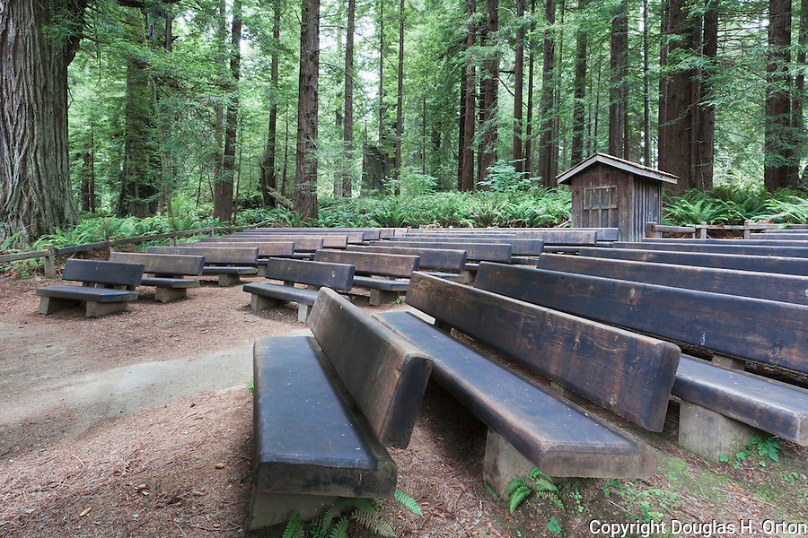 Outdoor theater in the Redwoods, Redwood National Park, Prarie Creek Redwoods  State Park,