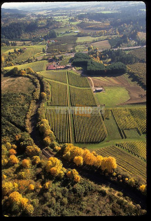 Aerial view of Rex Hill Vineyards in Newberg, OR.